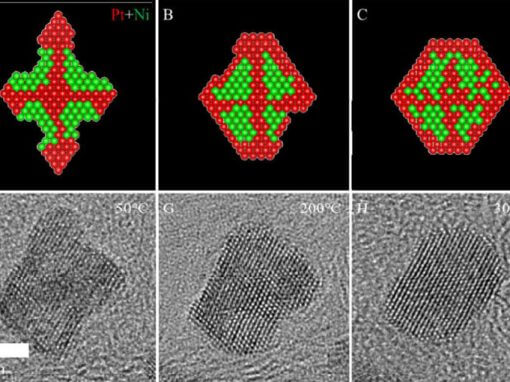 Shape Stability Of Octahedral PtNi Nanocatalysts For Electrochemical Oxygen Reduction Reaction Studied By in situ Transmission Electron Microscopy