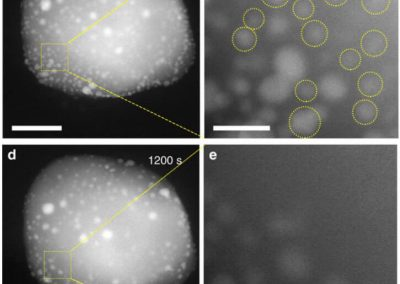 Non defect-stabilized thermally stable single-atom catalyst