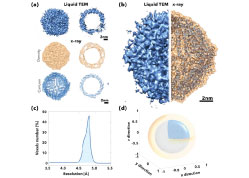 4D Liquid-phase Electron Microscopy of Ferritin by Brownian Single Particle Analysis