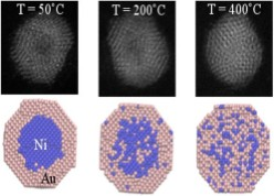 Thermally Induced Diffusion and Restructuring of Iron Triade (Fe, Co, Ni) Nanoparticles Passivated by Several Layers of Gold