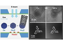 Precise Identification of the Active Phase of Cobalt Catalyst for Carbon Nanotube Growth by In Situ Transmission Electron Microscopy