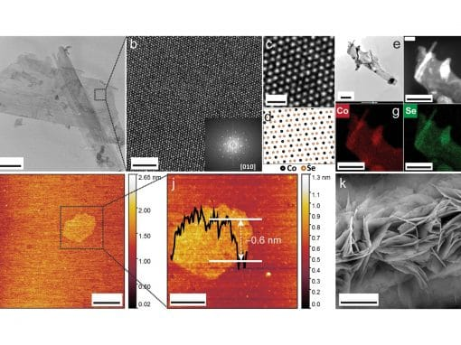 In situ electron microscopy study of structural transformations in 2D CoSe2