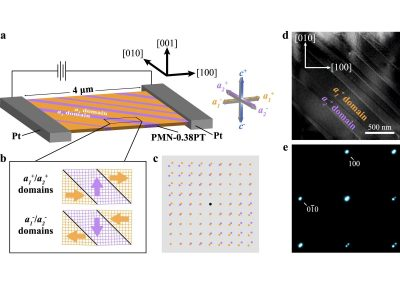 Direct observation of nanoscale dynamics of ferroelectric degradation